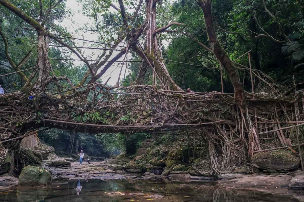 places_to_visit_in_northeast_India_rawai_living_root_bridge
