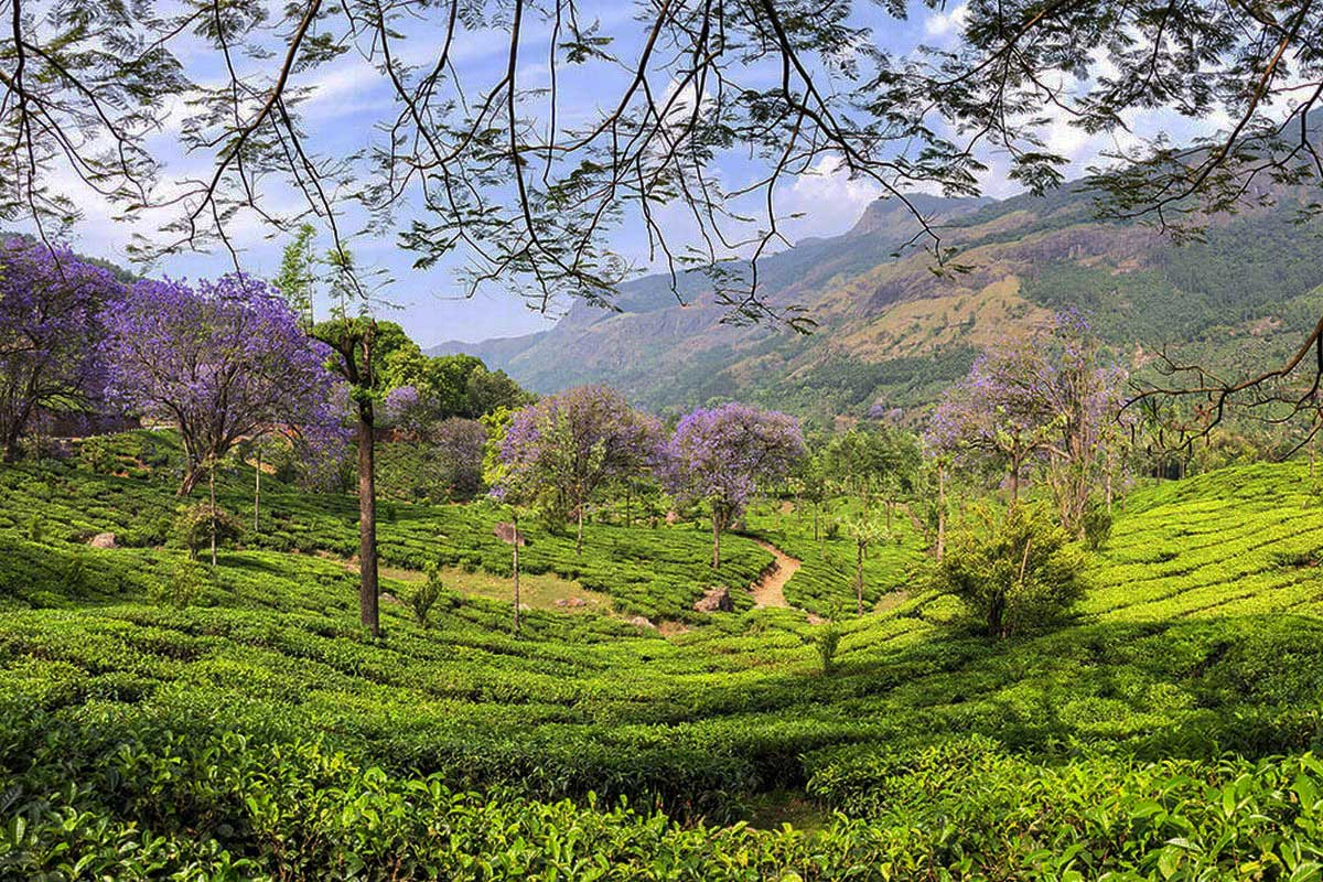 unexplored places in India Munnar