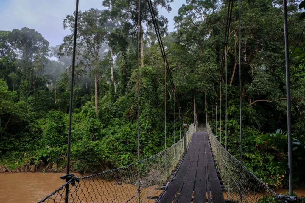 borneo_itinerary_danum_valley
