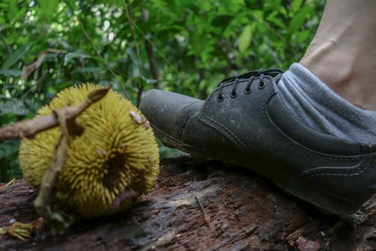 adidas_kampung_best_hiking_shoes_in_malaysia-6